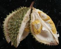 Durio zibethinus - Opened fruit - Click to enlarge!