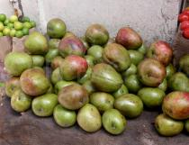 Mangifera indica - Fruits on  a market - Click to enlarge!