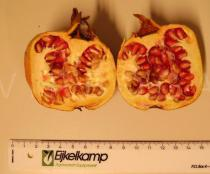 Punica granatum - Fruit with seeds and seed pulp - Click to enlarge!